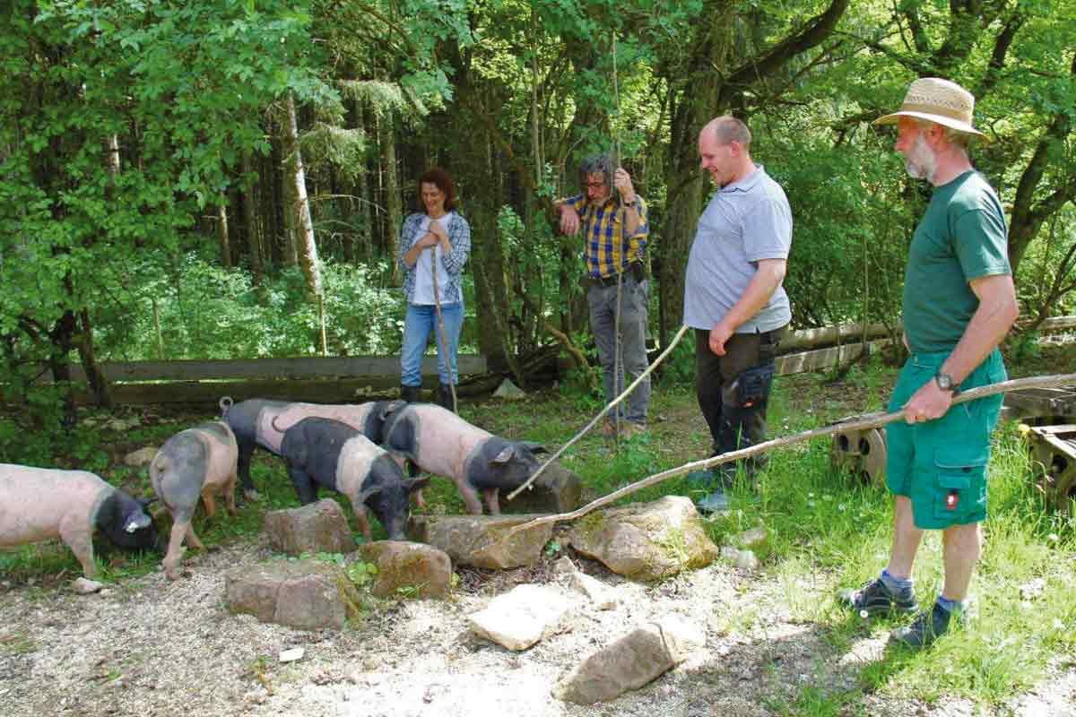Schweinehut im Freilichtmuseum Neuhausen