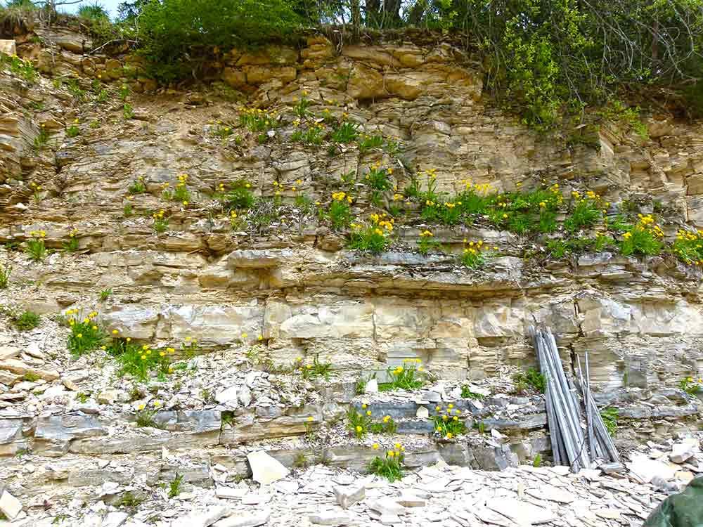 Blumen im Steinbruch