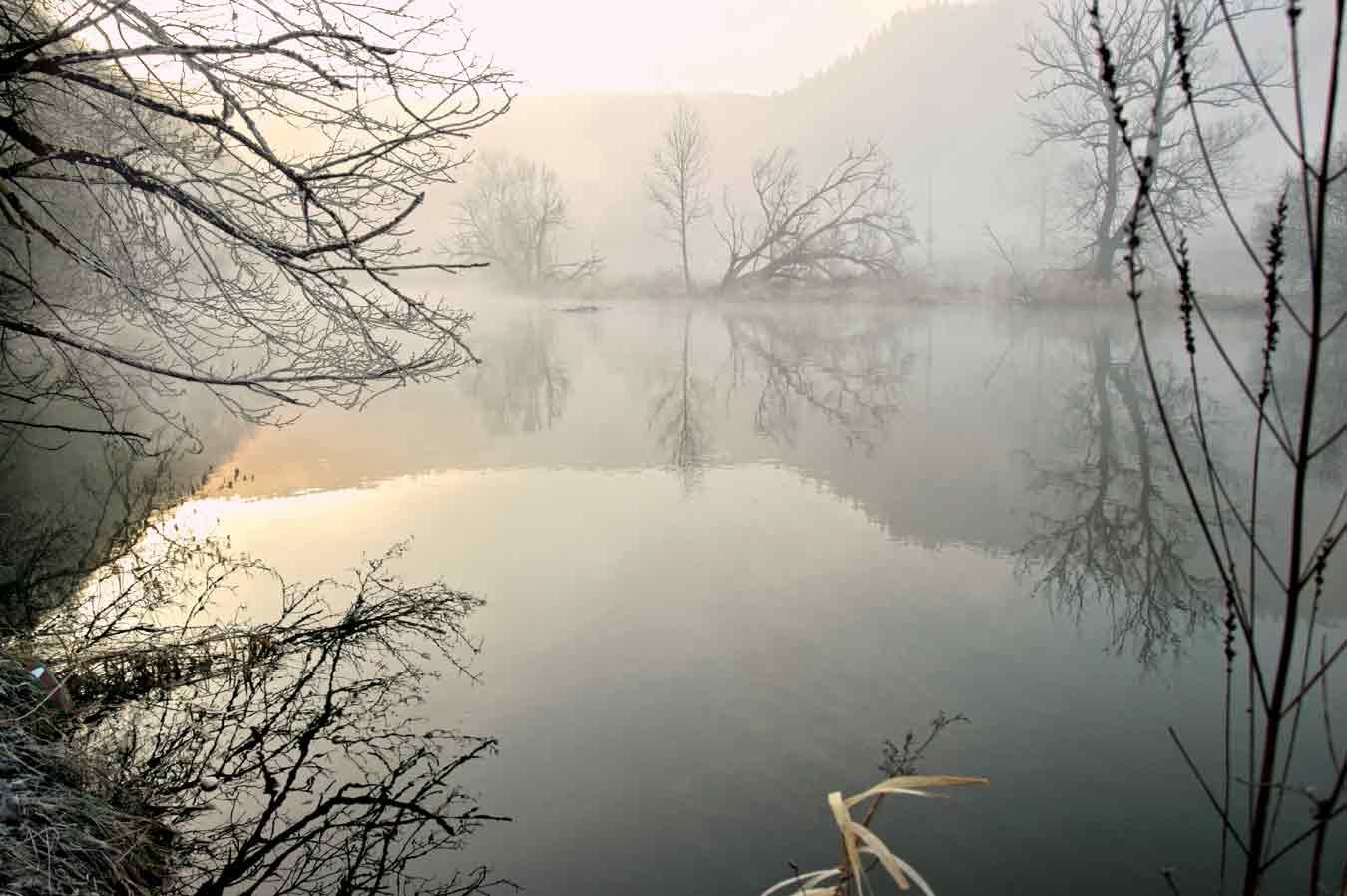 Morgennebel an der Donau