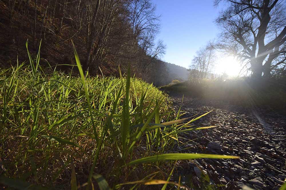 nahaufnahme Unterwasserpflanzen im trockenen Flussbett
